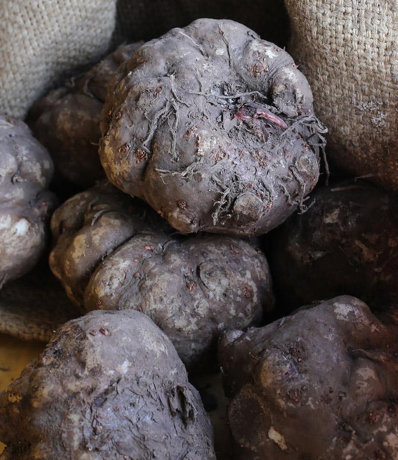 こんにゃく芋の品種
