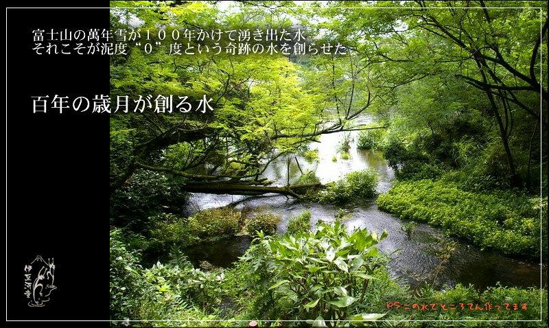 柿田川名水 富士山の万年雪が百年かけて湧き出た水